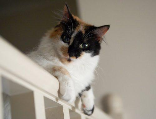Een trap en huisdieren: dit moet je weten