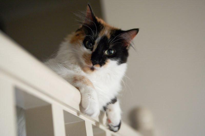 trap en huisdieren