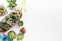 plantjes in de trap