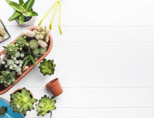 Plantjes verwerken in je trap? Volg deze tips